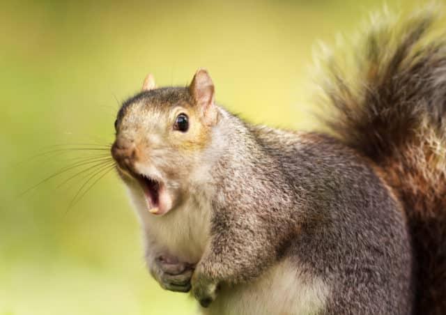 squirrelmail går i graven